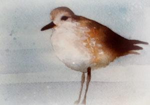 Shorebird--watercolor print